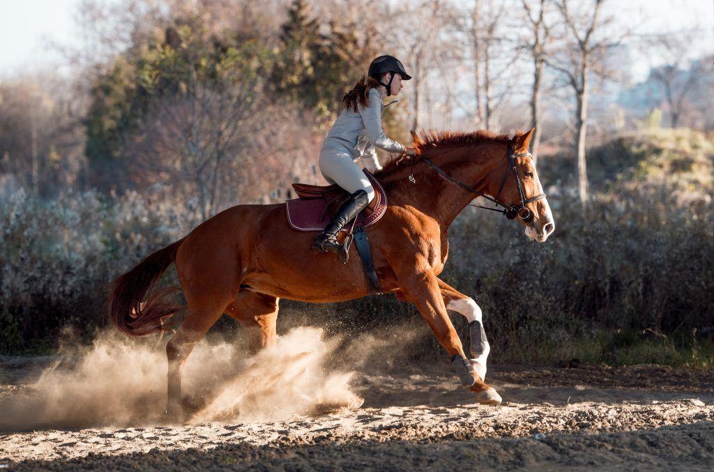 Как правильно сесть на лошадь