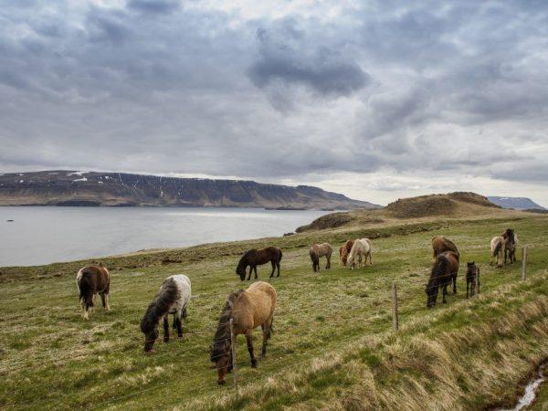 Срок жизни лошади будет меняться в зависимости от породы