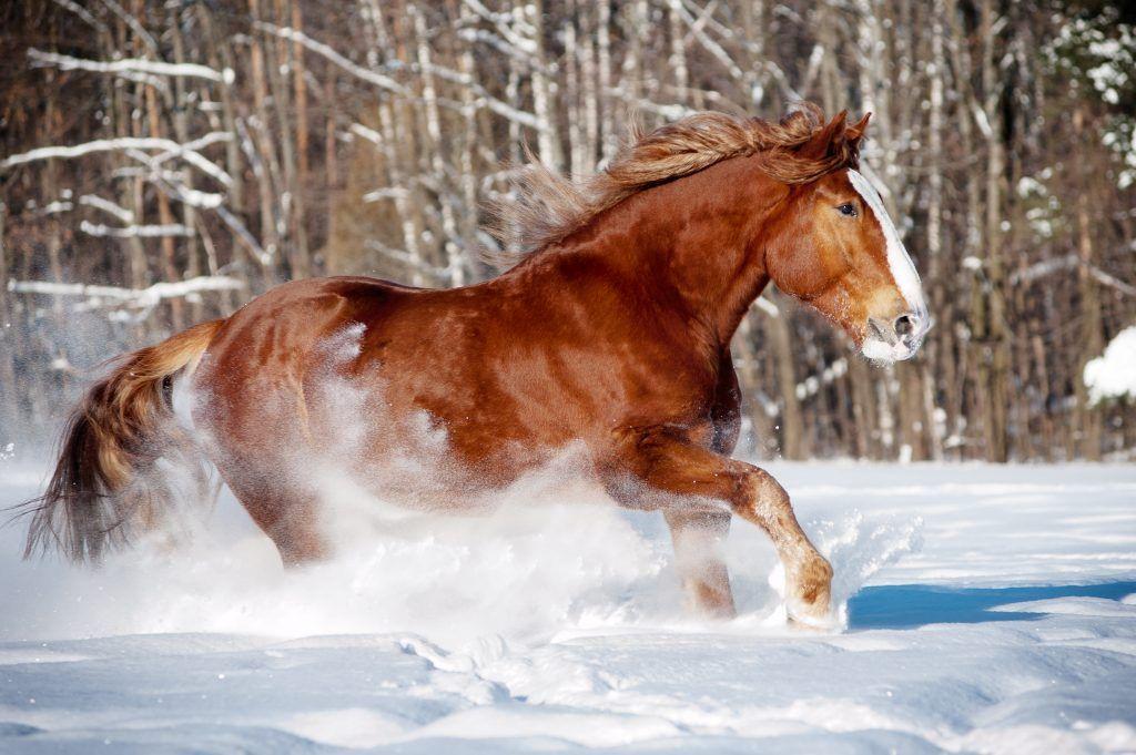 Буланый конь самый ценный скакун прошлого