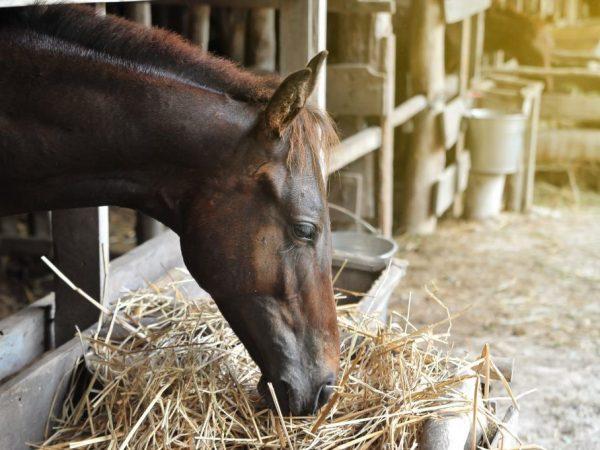 Питание лошади Кабардинской породы