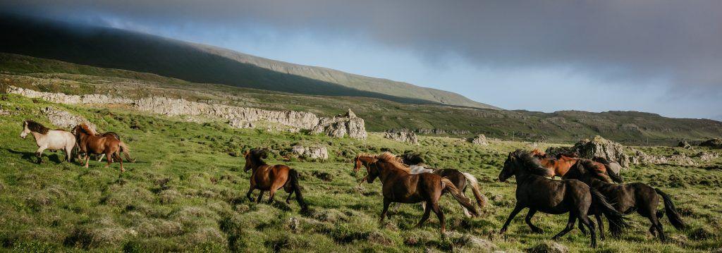 История происхождения лошади скалистых гор