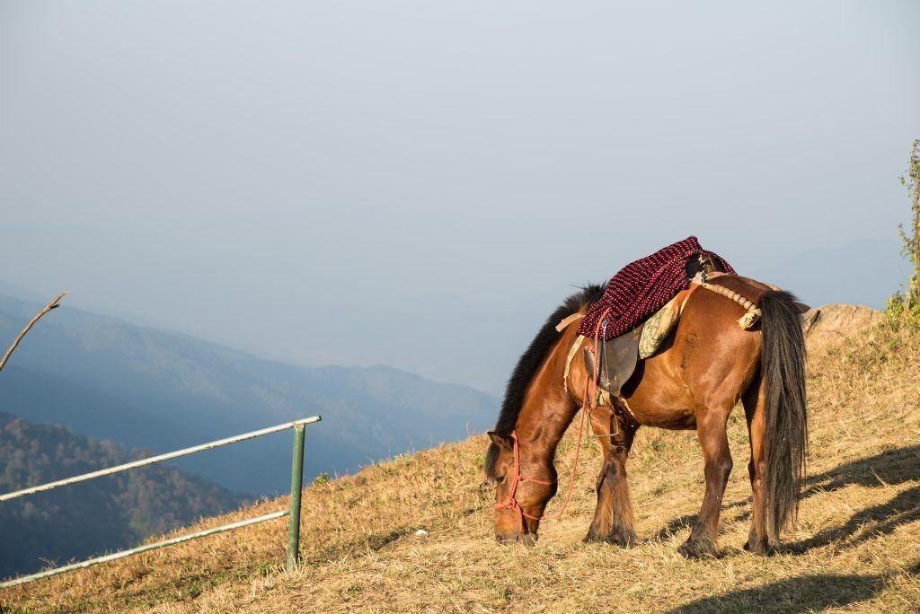 Лошадь скалистых гор ценится как средство передвижения