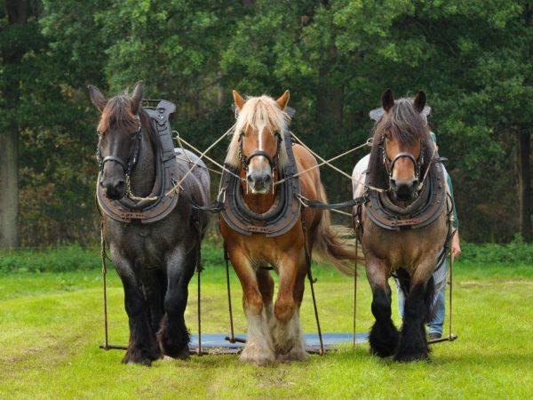 Снится три лошади