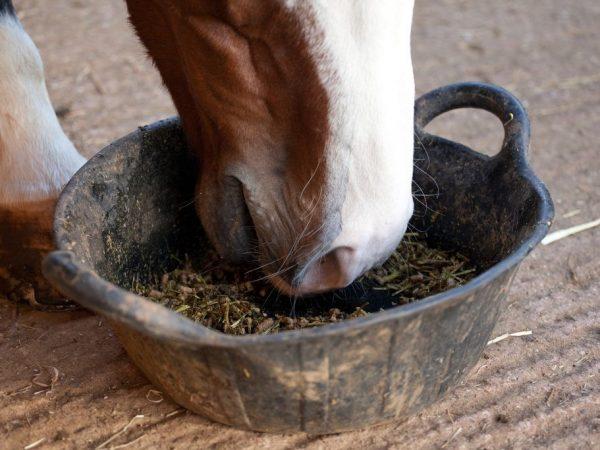 Уход за лошадью породы Русский Тяжеловоз