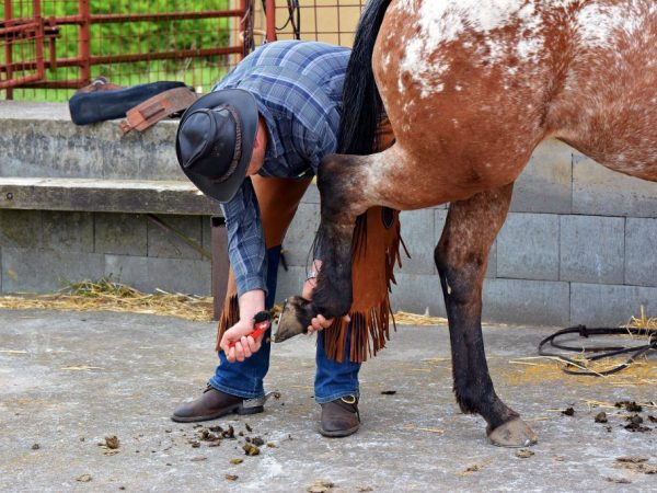 Долголетие лошади зависит от ухода за ней