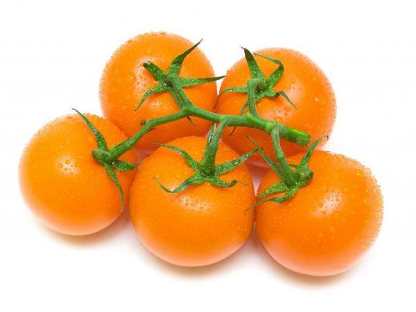 Внешний вид томата