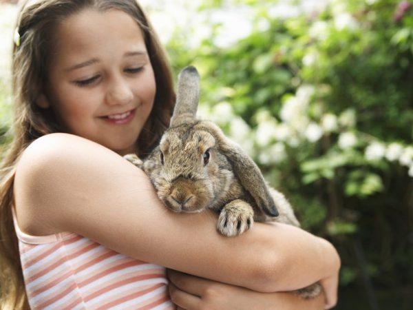 Правильный уход за кроликом