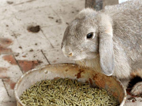 Питание кролика