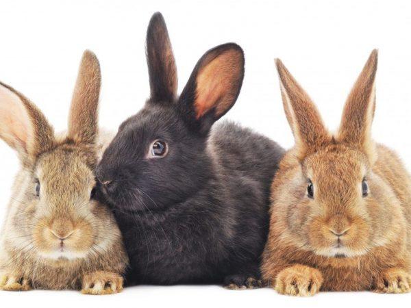 Правила отсадки крольчат