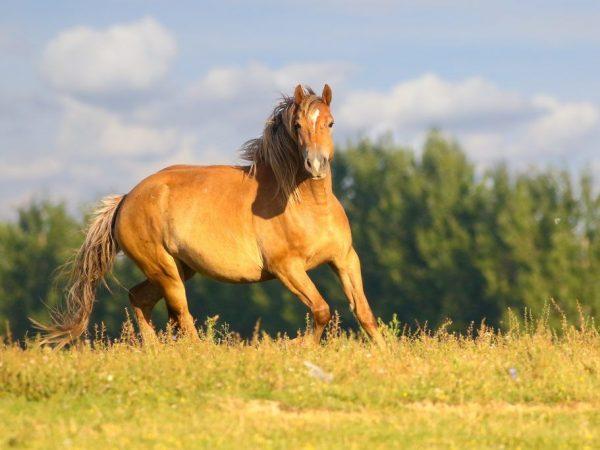 Как поднять лошадь в галоп
