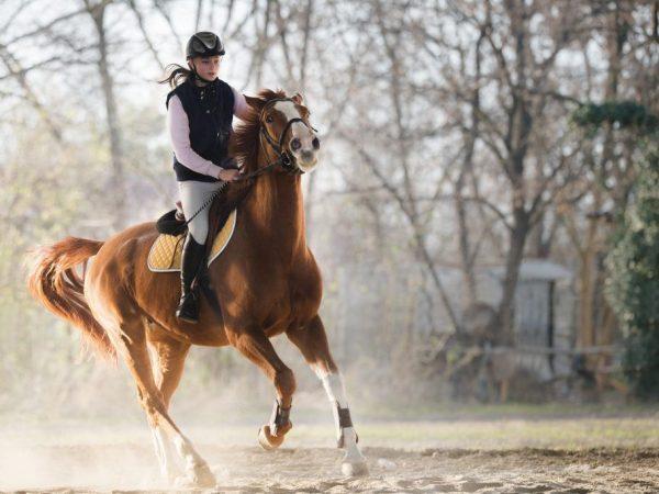 Снится езда на коне