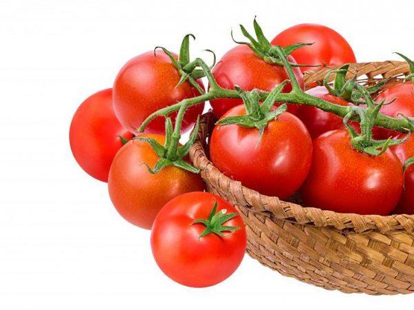 Достоинства и недостатки томатов сорта Яблоки на снегу