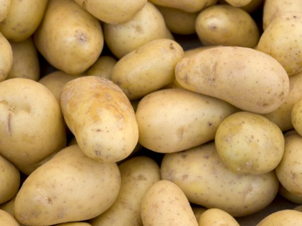 Характеристика картофеля Агата
