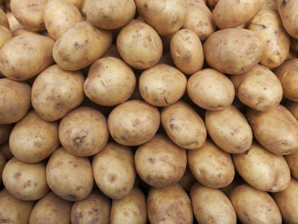 Картофель необходимо хранить в прохладном месте