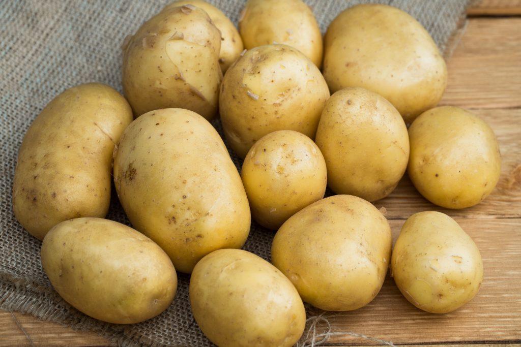 Картофель Голубизна: особенности сорта и выращивание