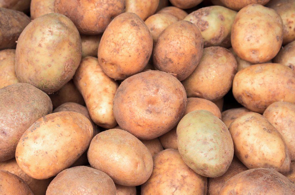 Описание сорта картофеля Ильинский его характеристика и урожайность