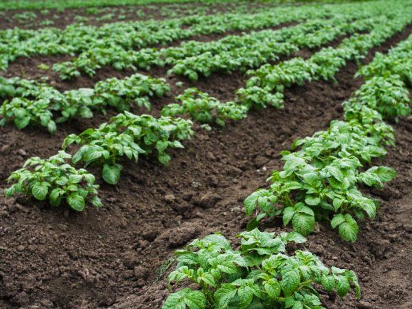 Для растений очень важно удобрение