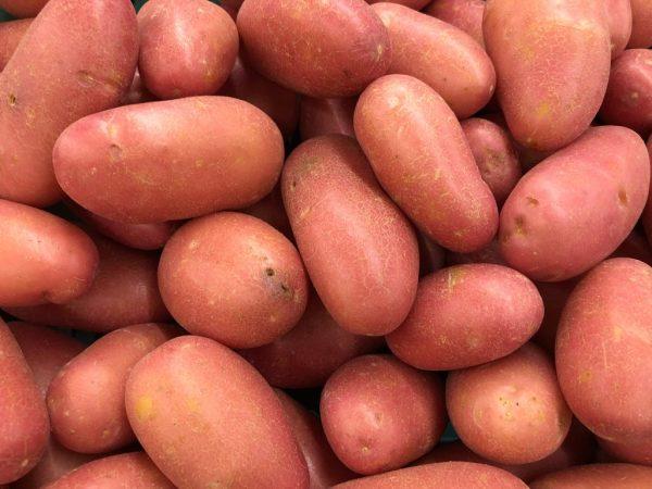 Картофель имеет сладковатый вкус