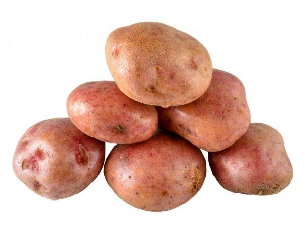 Описание картофеля Кураж
