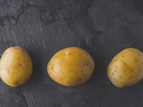 Характеристика картофеля сорта Лорх