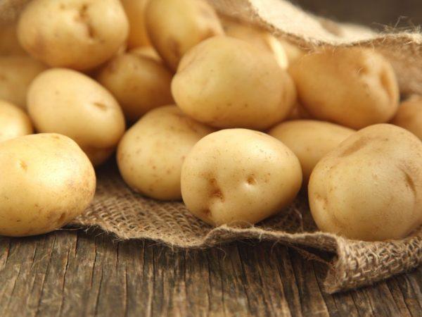 Описание картофеля Луговской