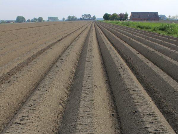 Правила подготовки почвы под картофель