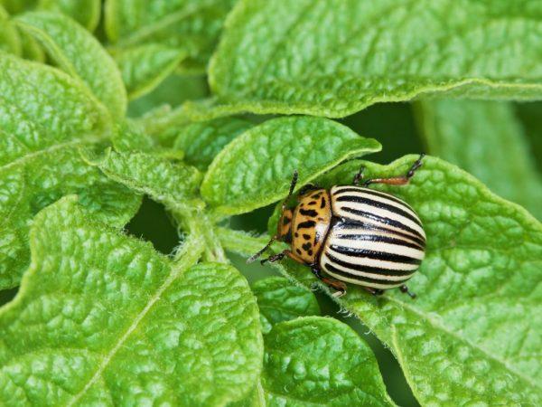 Растворы помогут избавиться от насекомых