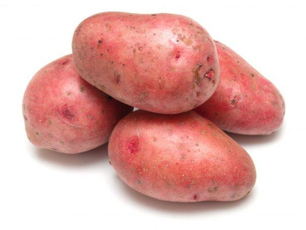 Картофель Розара: описание сорта, полноценный уход от посадки до сбора урожая 43