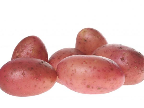 Описание картофеля Рябинушка