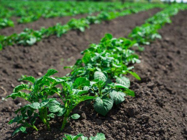 Для растений важна прополка