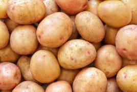 Характеристика картофеля сорта Жуковский (ранний)