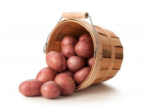 Описание картофеля Журавинка
