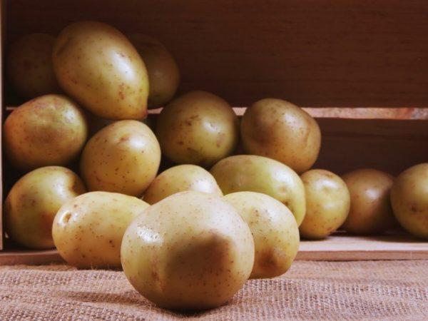 Картофель можно сохранить до середины весны