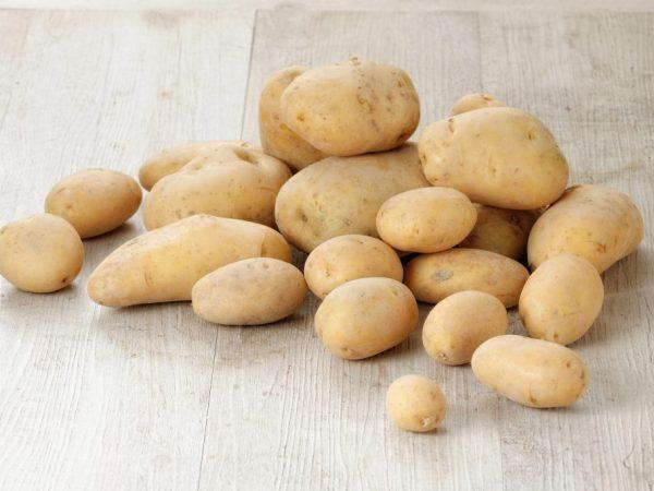 Характеристика картофеля сорта Крона