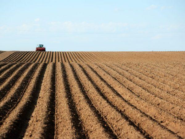 Слишком сухая почва не подходит для посадки