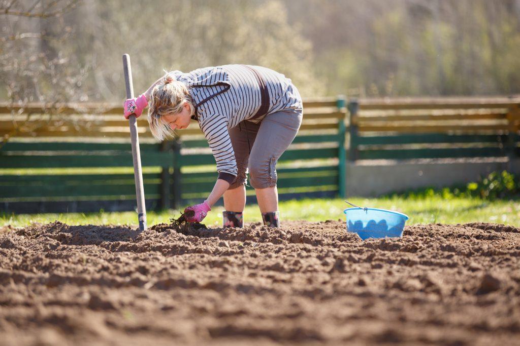 Как правильно сажать картофель под лопату