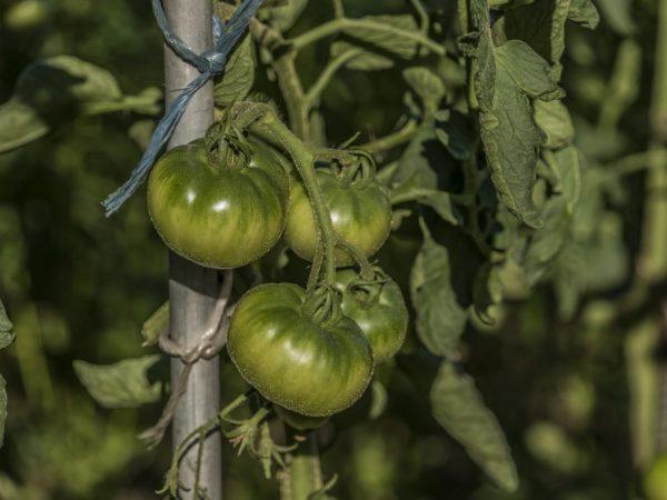Растение нуждается в удобрении