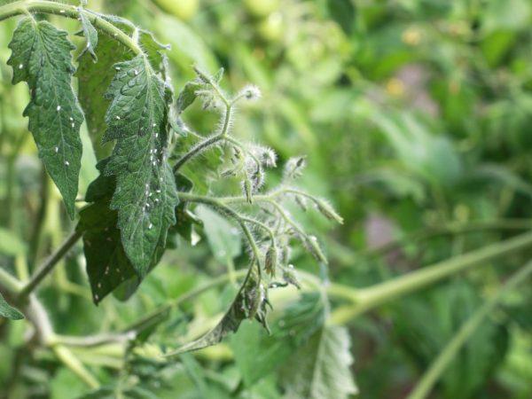 Повышенная влажность может спровоцировать появление насекомых