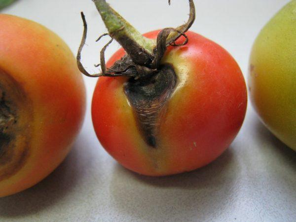 Гнилой помидор во сне указывает на неудачи в любви