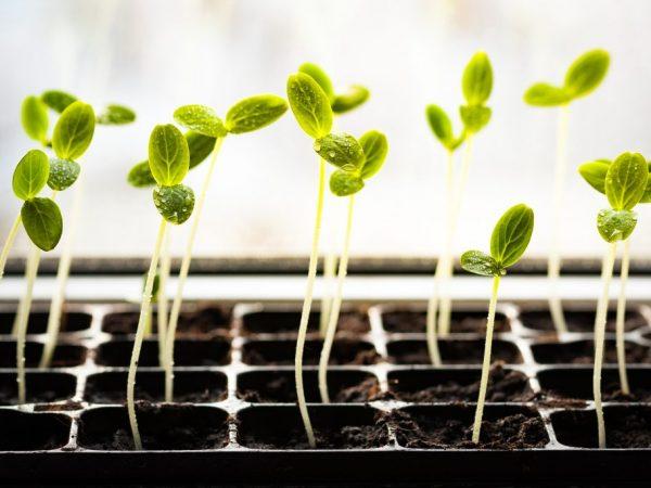 На всхожесть семян влияют семь основных факторов