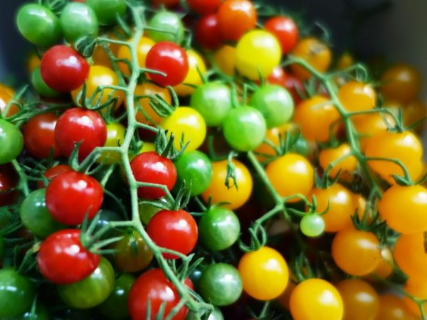 Существует несколько разновидностей томатов данного сорта