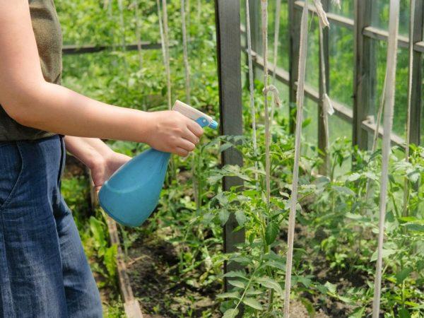 Опрыскивайте растения очень аккуратно
