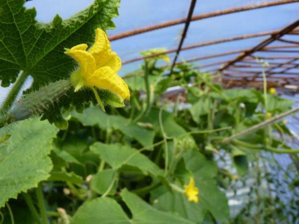 Удобрение из дрожжей благотворно влияет на рост растений