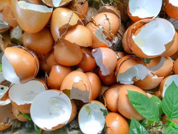 Яичная скорлупа является источником кальция