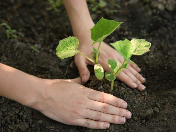 Растению требуется солнечный свет