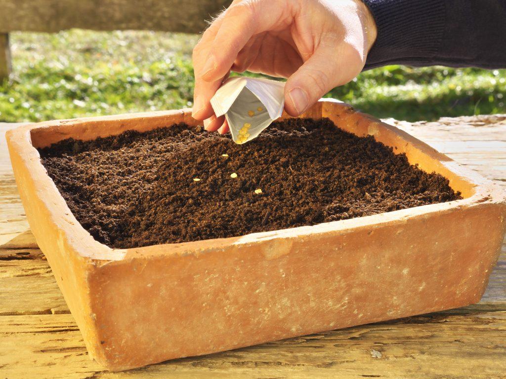 сделать пакеты для посадки рассады томатов