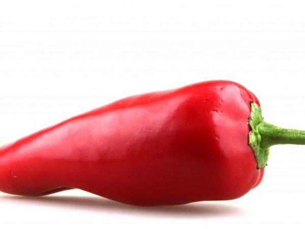 Острый перец сорта Красный Толстяк