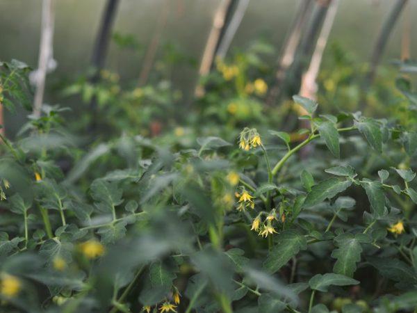 Растения требуют обильного полива