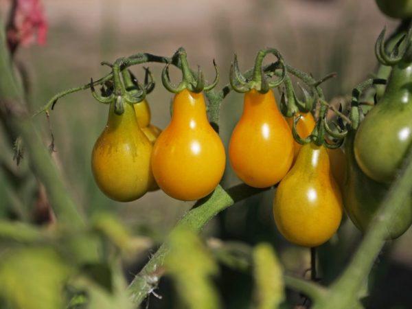 Соблюдение правил поможет получить хороший урожай