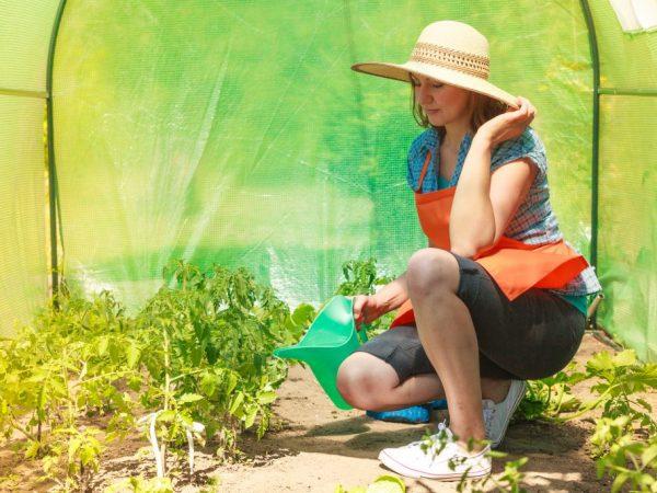 Обработка поможет избежать образования пустоцветов
